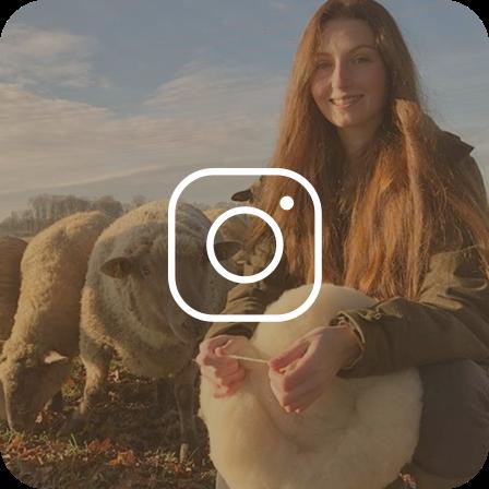 Westfalenwolle Instagram